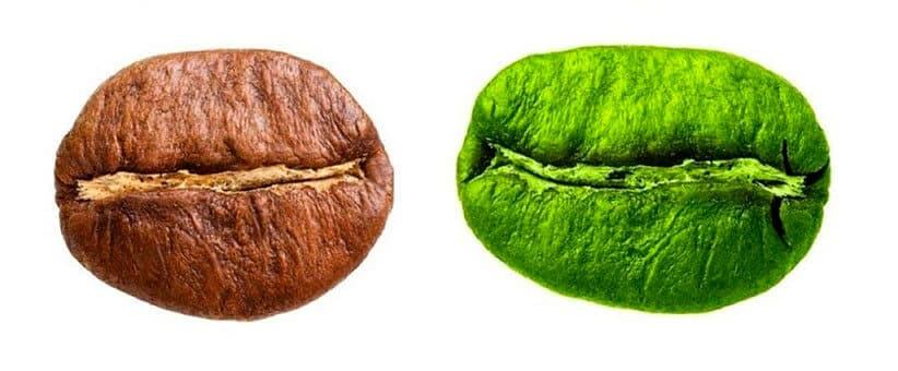 especie-de-cafe-robusta